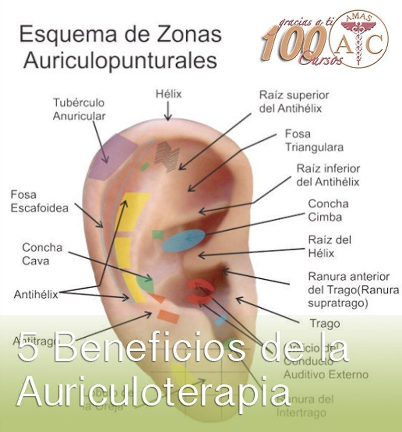 Beneficios de la Auriculoterapia
